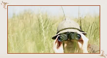 click here for details Bird Watching